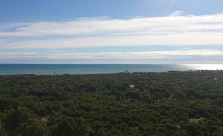 Apartament - Beach/ New - Guardamar - Puerto /PLAYA